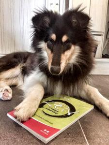 """Kniha """"Zen v umění konstelací"""" a pes"""